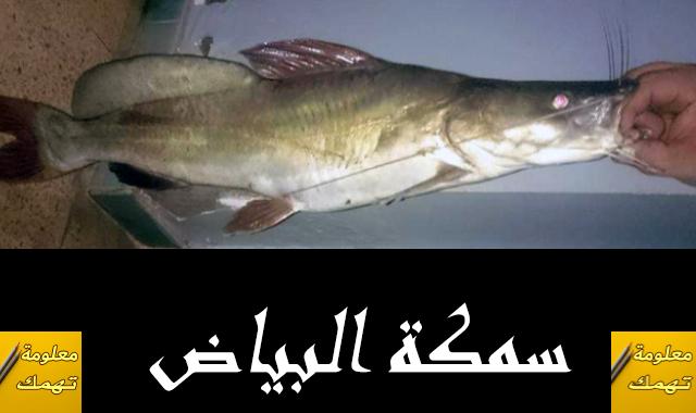 سمكة البياض النيلى