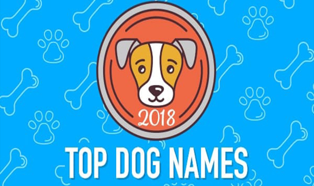 Top Dog Names of 2019 #infographic