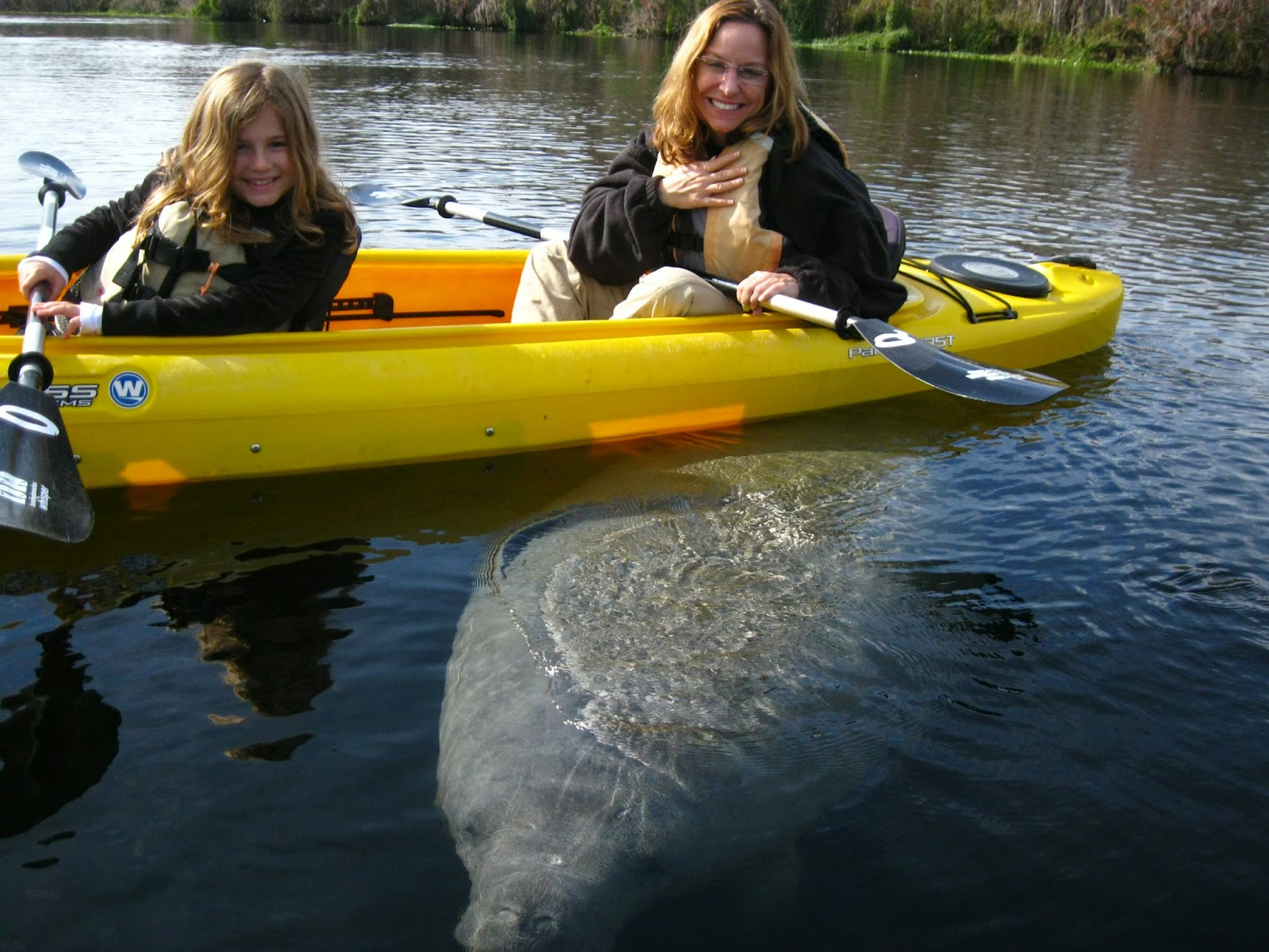 Remarkable canoeing around redhead fl join. And