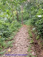 trekking dibogor