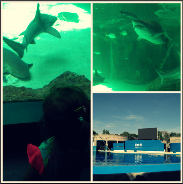 visitando-el-zoo-aquarium-de-madrid