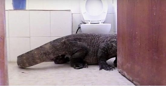 Dragão-de-Komodo gigante no banheiro - Capa