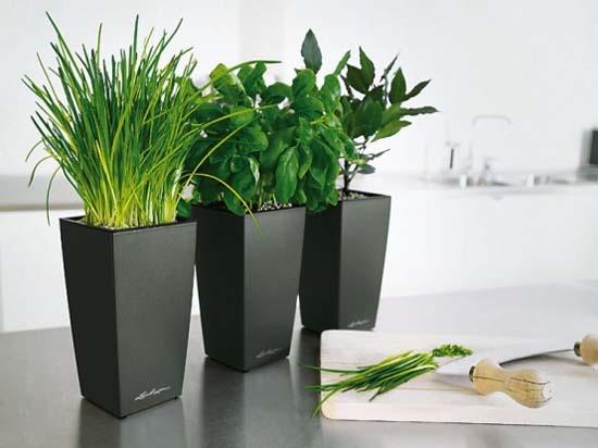 Black+Modern+Pots+Indoor+Kitchen+Planters Flower Pots Houseplants on gardening pots, herb pots, container pots, nature pots, plants pots, bulb pots, green pots, moss pots, roses pots, greenhouse pots, spring pots, succulents pots, cactus pots, orchid pots, nursery pots, annual pots, water pots, bamboo pots, vegetable pots, planter pots,
