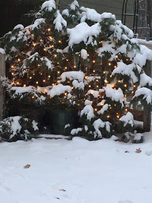Runny Babbit's Winter home