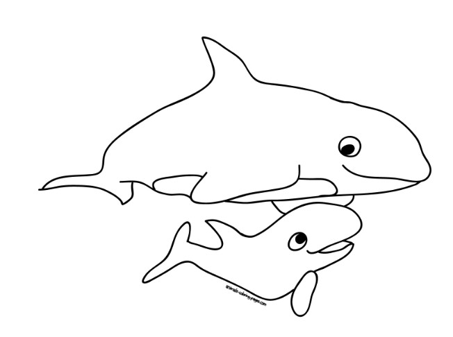 92 Koleksi Gambar Kolase Hewan Laut Gratis Kumpulan Gambar Kolase