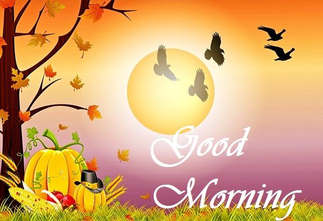 Good Morning Bird with sunrise