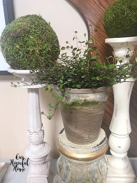 Angel Vine mossy clay pots moss balls