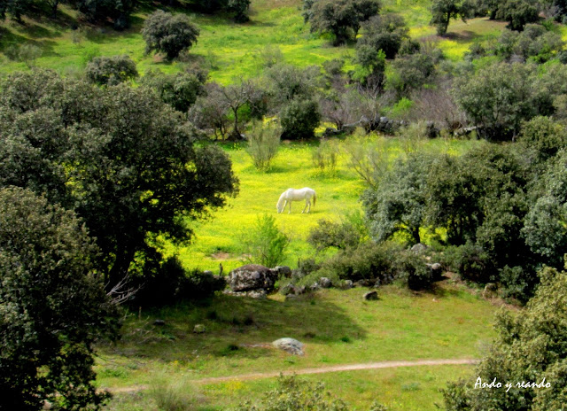 primavera, caballos, praderas, flores