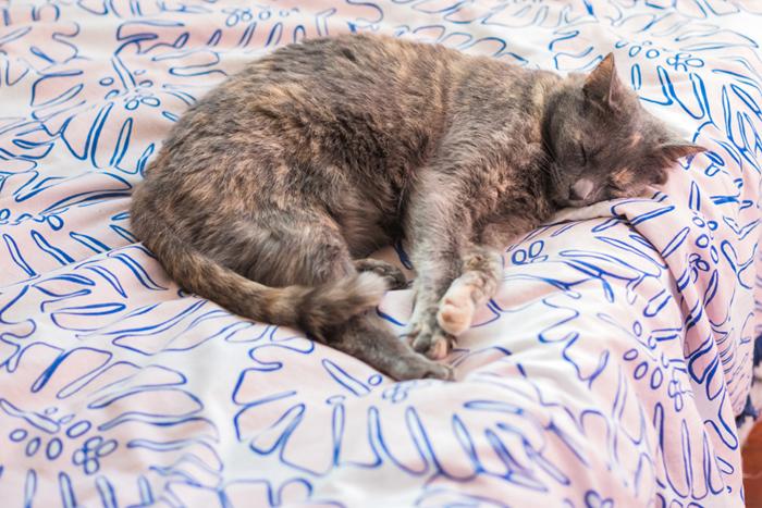 cat asleep on monstera blanket