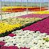 Mossoró receberá Festival das Flores de Holambra