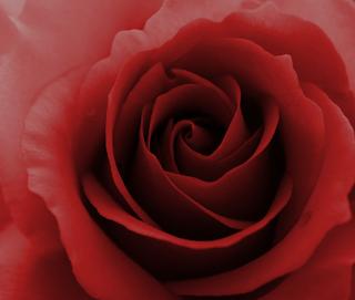 http://robamimi.biz/games/roses99/story3/story3.html