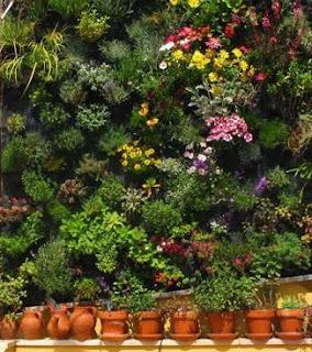 cara bikin kebun vertical
