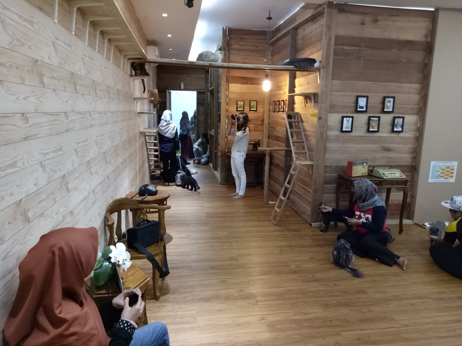 House Of Cat Shah Alam Tutup