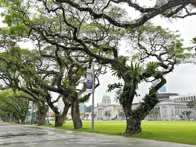 heritage rain trees