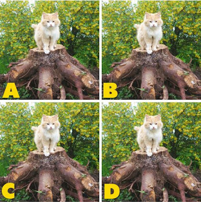 Which image is different? image 39