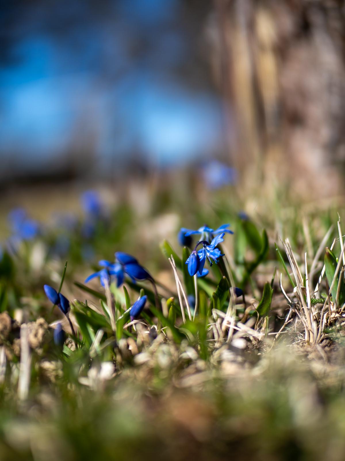 keväällä kukkivat kukat