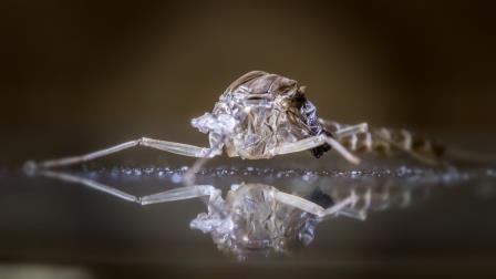 Bahan Alami Ini Sangat Ampuh Mengusir Nyamuk