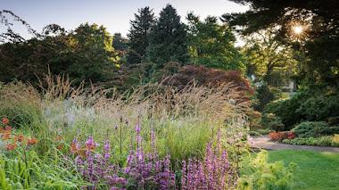 4 vídeos para recorrer los jardines de la RHS en verano