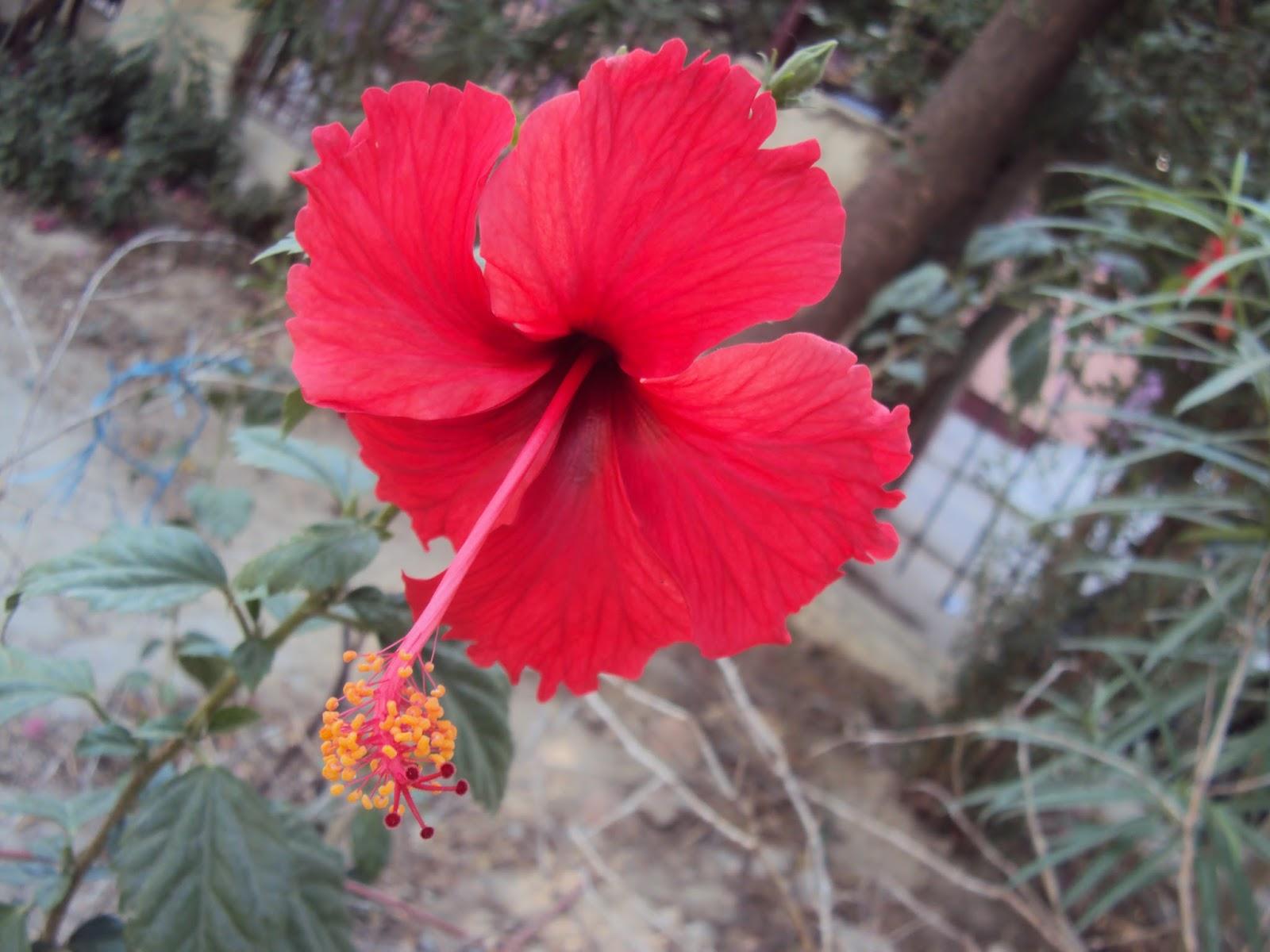 Creative Craft Gallery Flowers For Alekhan Design