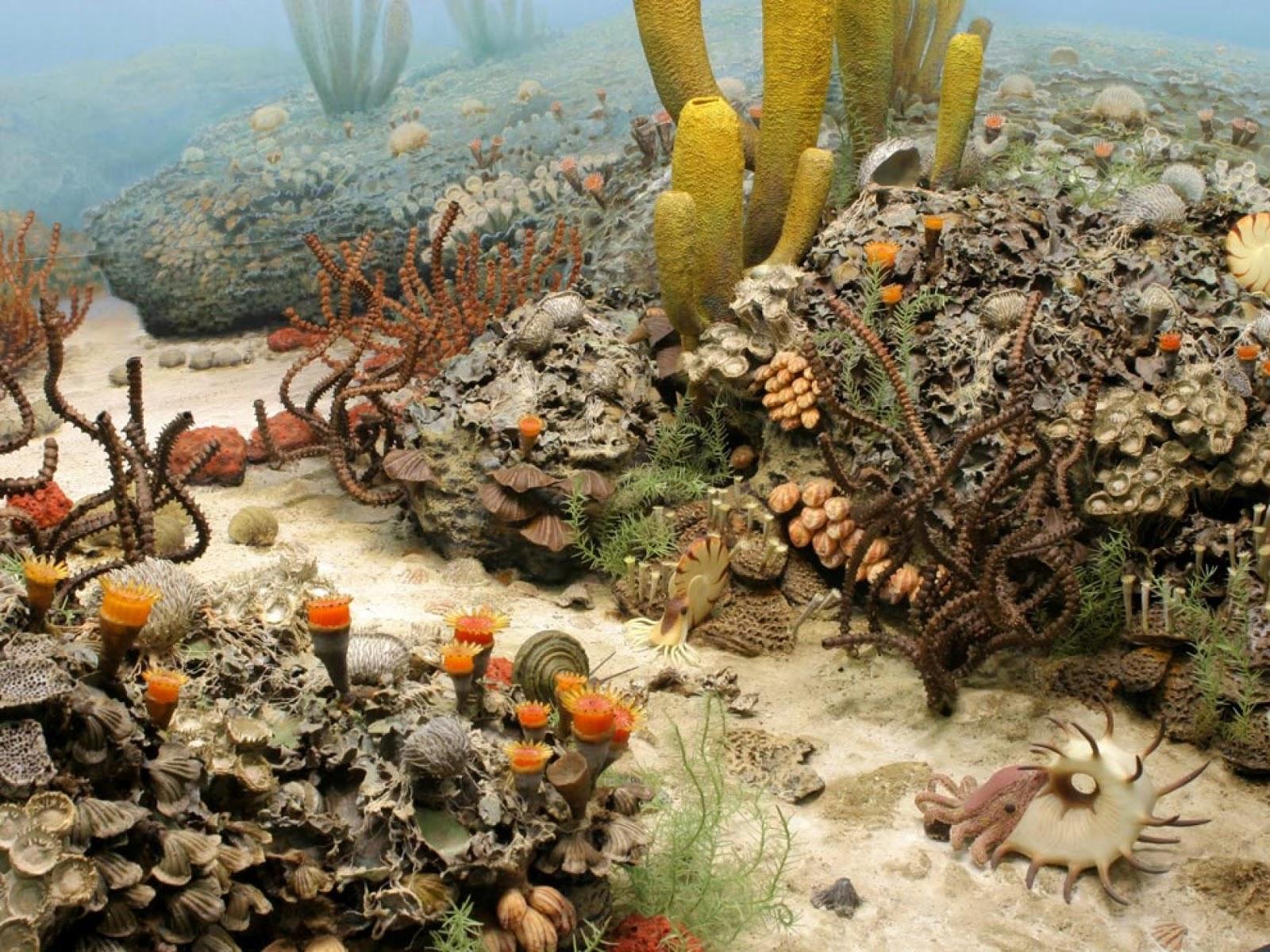 животные пермского моря картинки каждой