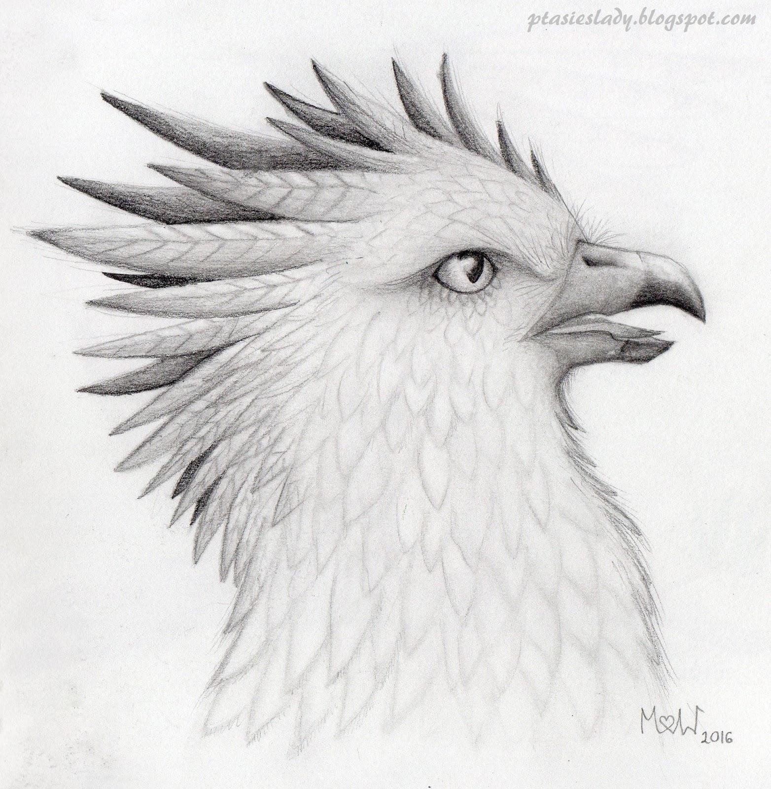 Ptasimi śladami Stycznia 2017