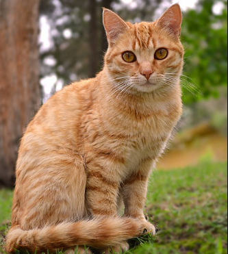 Makanan Yang Cocok Untuk Kucing Kampung
