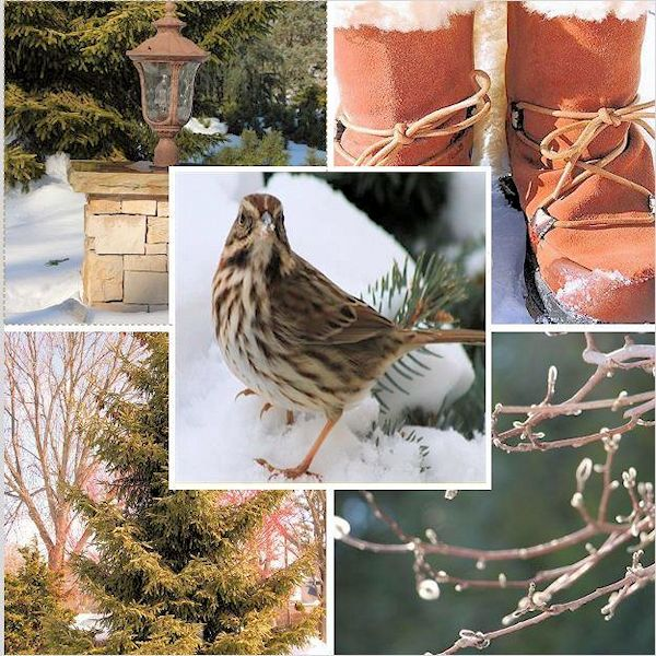Westbury Gardens Winter: A GUIDE TO NORTHEASTERN GARDENING