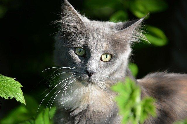 Cute Cat Images, Wallpaper HD Free Download