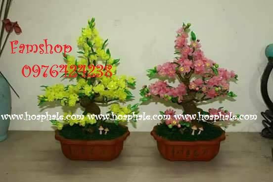 Goc bonsai cay hoa mai cay hoa dao tai Le Duc Tho