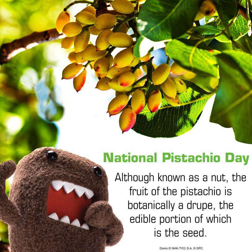 National Pistachio Day Wishes Pics
