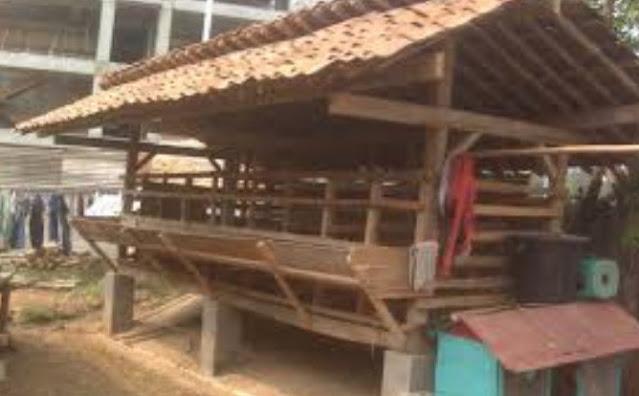 Gambar Desain Kandang Kambing Bambu Panggung