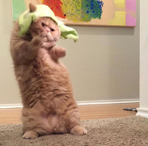 gato fantasiado engraçado