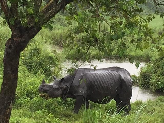 A Run In With Rhino!!!