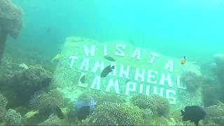 Wisata taman nemo lampung pulau pahawang
