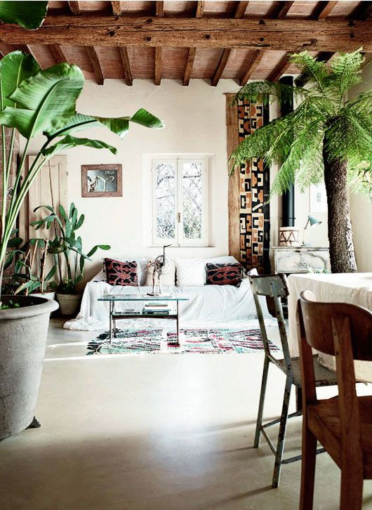 A Soothing Interior with Beautiful Plants.