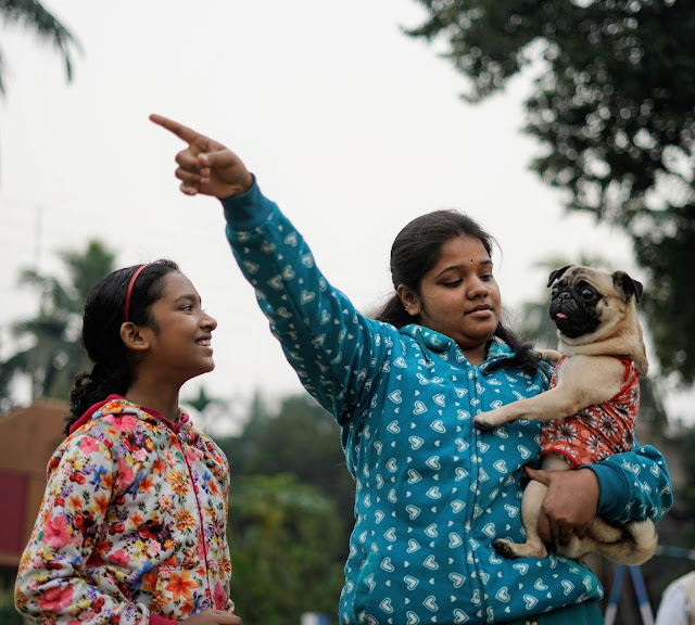 Pug Captured By Sourajit Saha 1