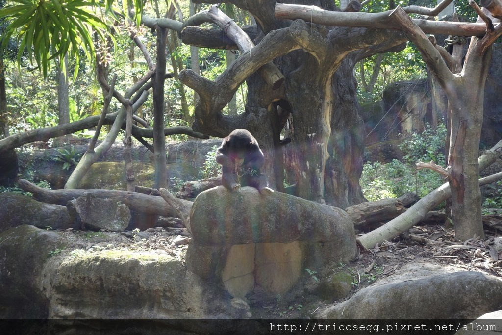 台北動物園(50).jpg