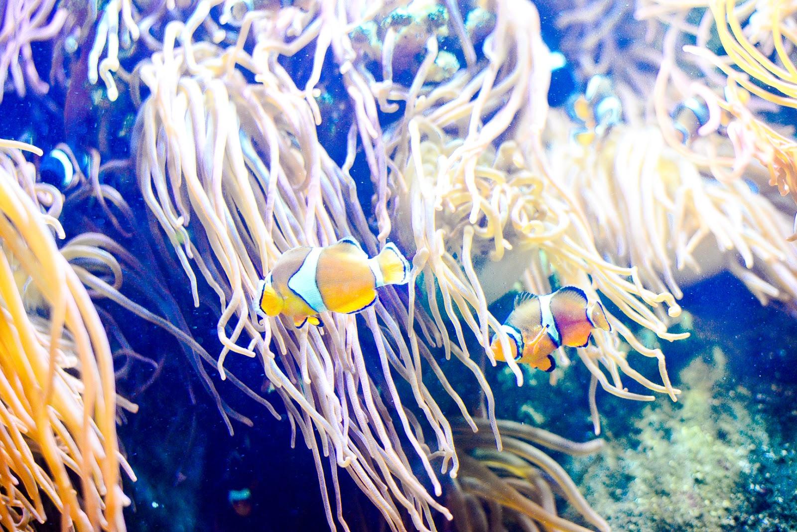 the national marine aquarium Plymouth