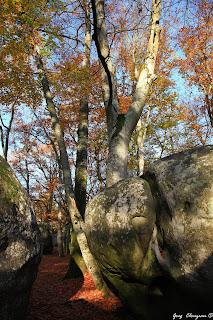 Automne au Bas Cuvier en Forêt de Fontainebleau