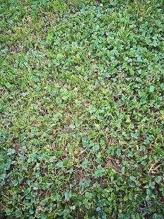 下高井戸おおぞら公園の芝生