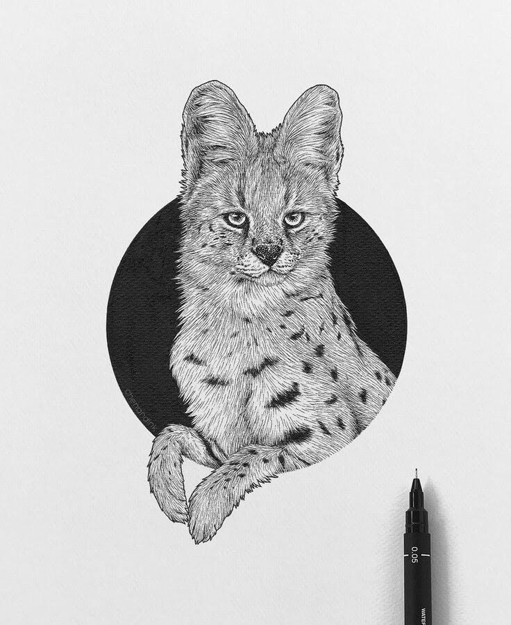 09-Serval cat-Chen-Naje-www-designstack-co