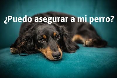 razones para que el perro tenga seguro