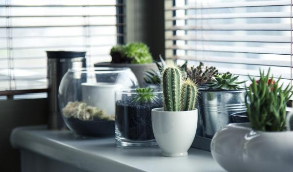 Mi remanso de paz plantas de interior con poca luz for Plantas de interior para poca luz