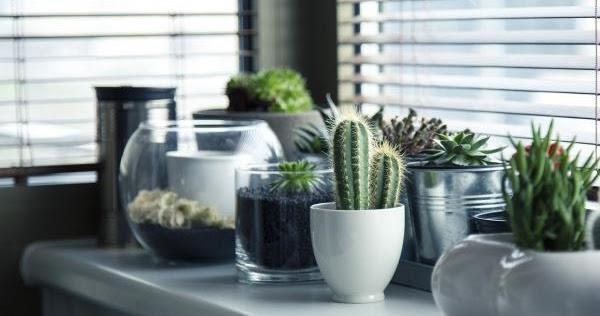 Mi remanso de paz plantas de interior con poca luz for Plantas de interior con poca luz