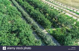 negative effects of climate change on agriculture