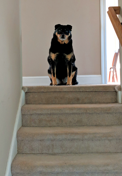 image of Zelly sitting at the top of the stairs, looking down at me