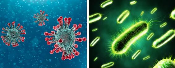 Bệnh hô hấp do các loại vi khuẩn và virus gây ra