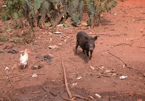 56fbdfd89cb La localisation du porc dépend avant tout du contexte historico-religieux.  Le porc n est que peu ou pas représenté dans les pays où l influence  islamique ou ...