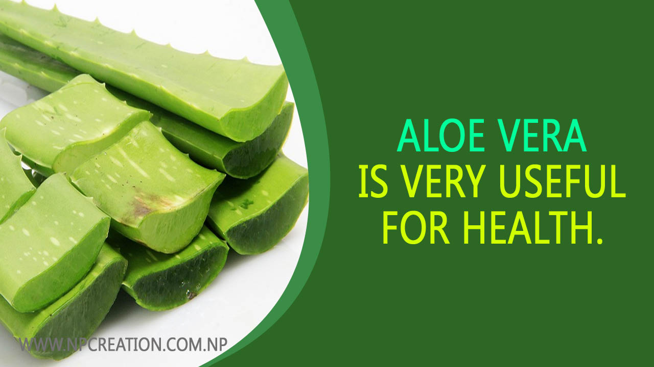 Aloe vera is very useful for health. Let's know.