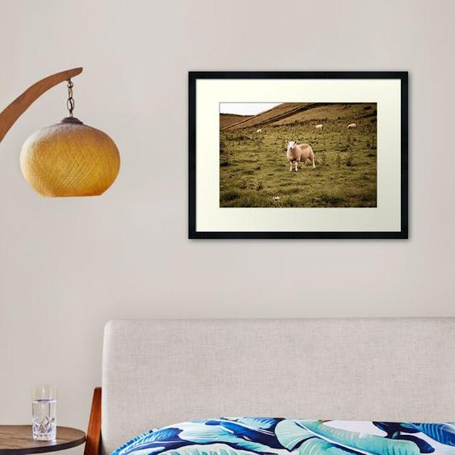 Scottish Sheep Grazing in the Isle of Sky Scotland